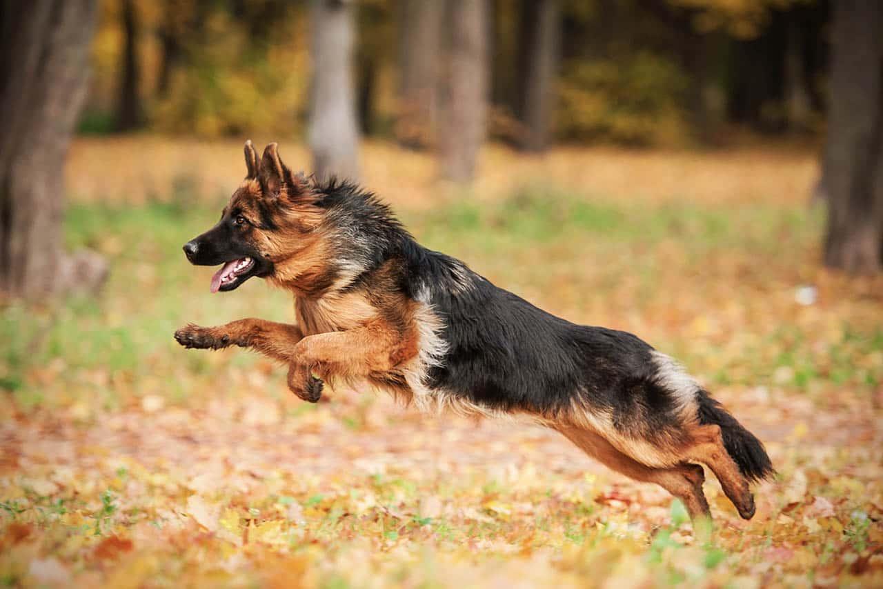 Caniero Energy kutyatáp
